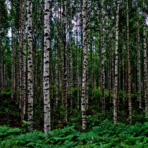 puiden istutus istutamme puita saaren taika