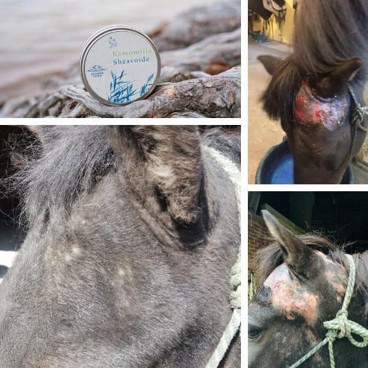 hevosen ihottuma parani kamomilla sheavoiteella
